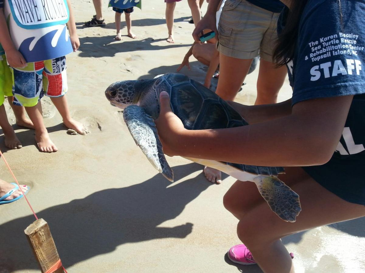 Releasing a rehabilitated sea turtle back into the ocean. http://www.seaturtlehospital.org/