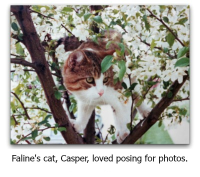 Photo of Faline's beloved cat, Casper, posing in a tree.