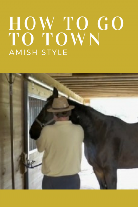 Watch a video of how an Amish buggy is prepared to go to town.