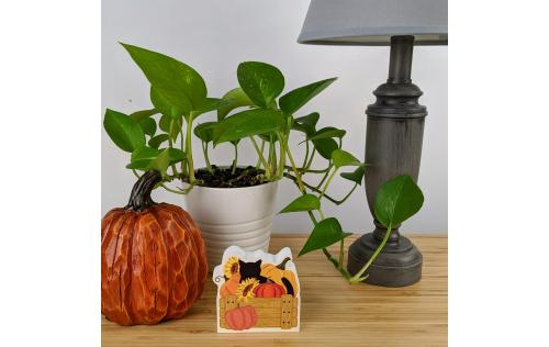 "Add a little fall decor to your work area. Wouldn't this cute fall cat and pumpkins look cute on your workdesk or bookshelf? We handcraft it in 3/4"" thick wood in Wooster, Ohio."