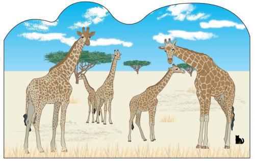 Giraffes, Front