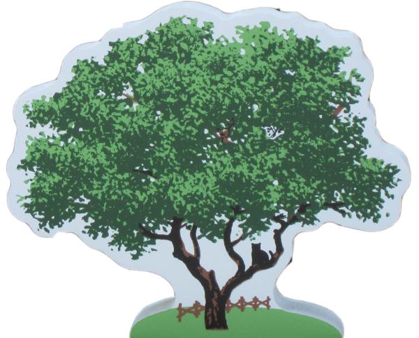 Live oak tree, oak tree
