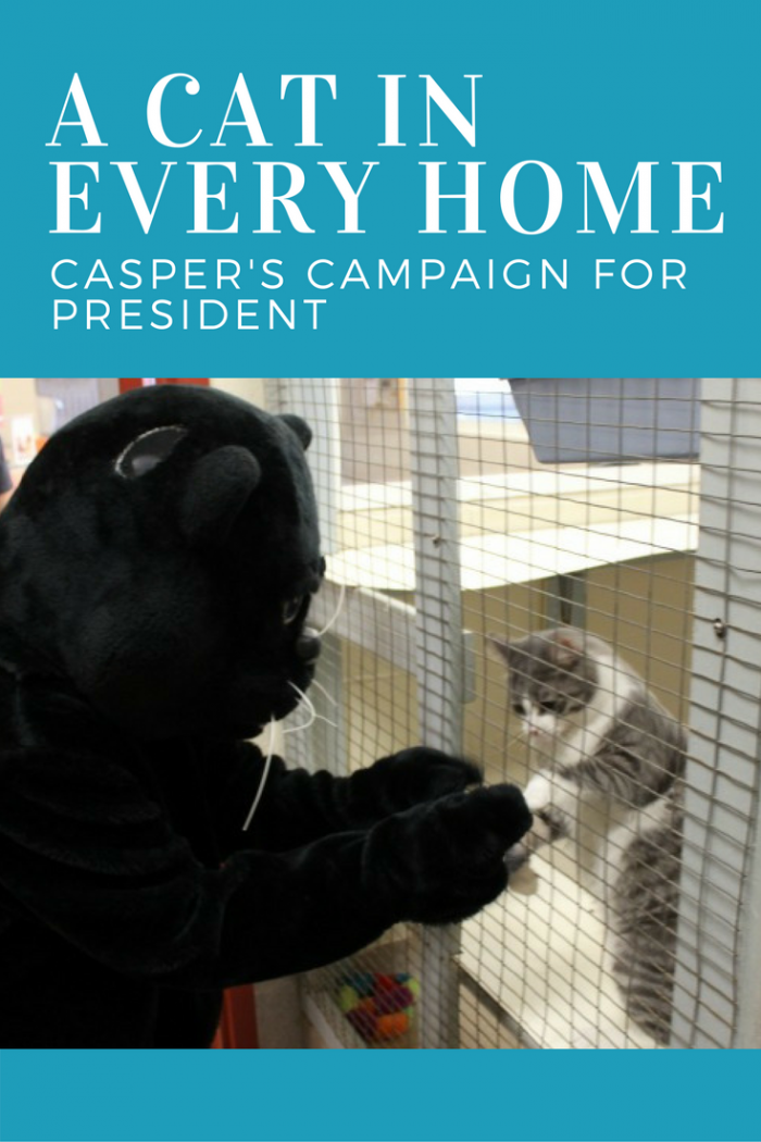 Vote for Casper for US President. We're pawsitive your vote will help change the country.